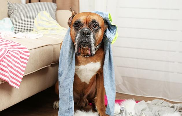 Les animaux dans les logements : état de la situation